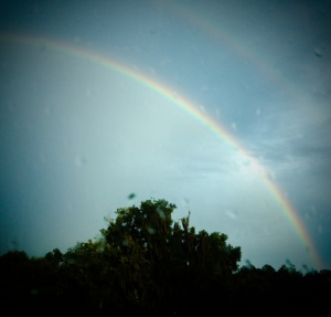 juli's rainbows