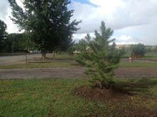 new trees