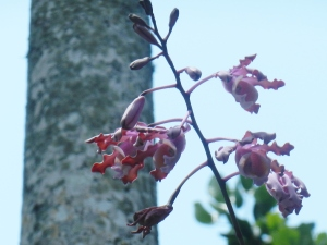 orchids in air