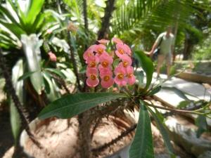 pick orchid close